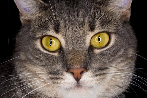 目をクローズアップした猫の顔