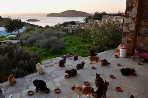 見晴らしの良い庭でくつろぐ沢山の猫