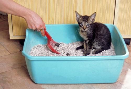 猫のうんちをスコップですくっている所