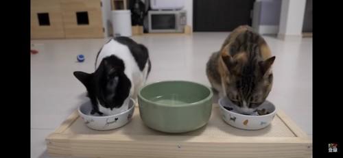 ご飯を食べる2匹