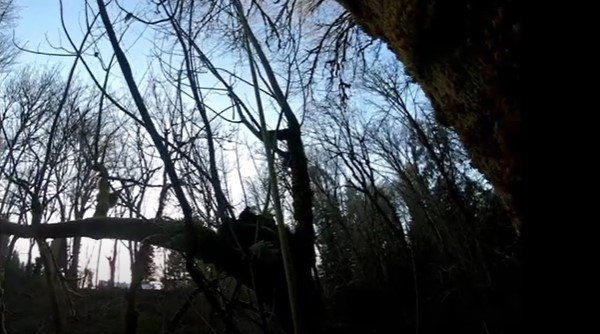 ブーミ―が立ち往生している木