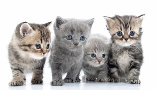 複数の子猫