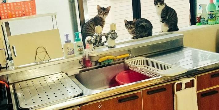 台所の窓から外を見る3匹の猫