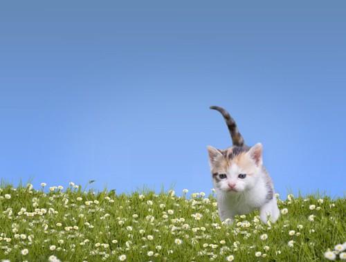 草原の中の子猫
