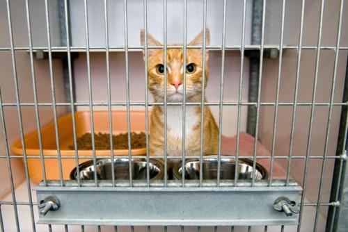 トイレと食器のあるケージにいる猫