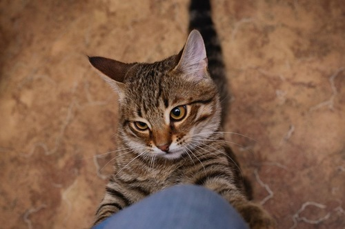 イライラしている猫