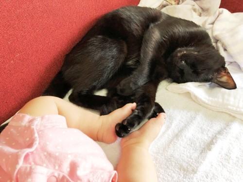 子守する黒猫と足をつなぐ赤ちゃん