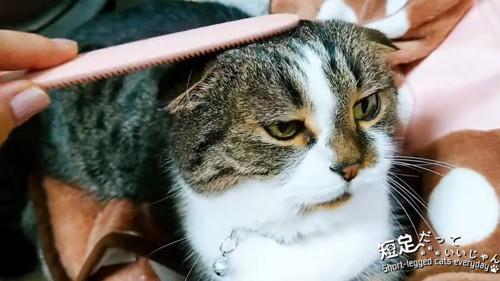 猫じゃすりで頭をなでられる猫