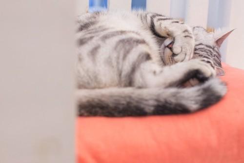 前足で顔を隠して寝る縞模様の猫