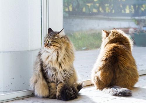 2匹の長毛の猫