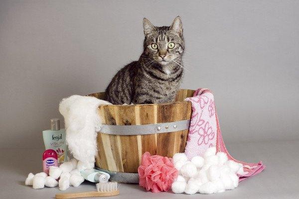 風呂桶と猫
