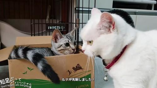 白猫と子猫
