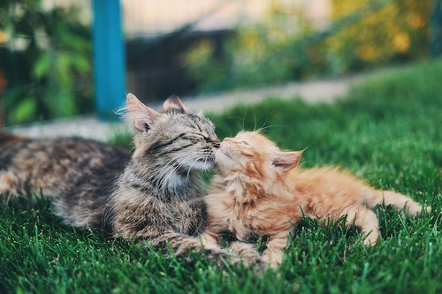 子猫に毛づくろいをしてあげている猫