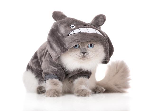 トトロの着ぐるみをきた猫