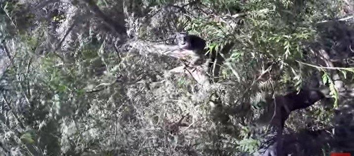 木を登ります