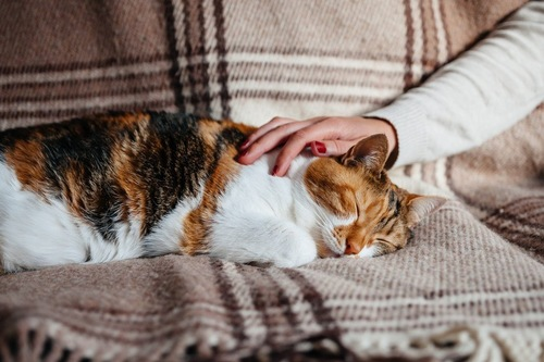 眠る猫をなでる手