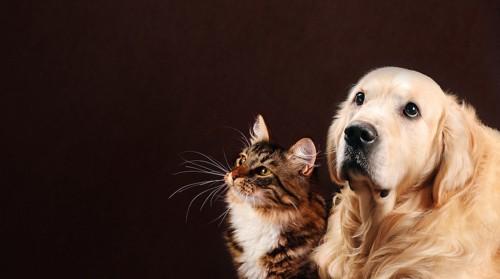 悲しげな猫と犬