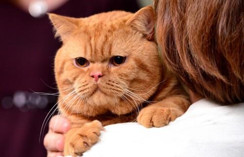 ブリーダーに抱かれた猫