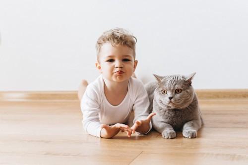 金髪の赤ちゃんとグレーの猫