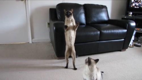 隣の猫も見る