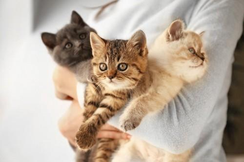 三匹の猫を抱く人