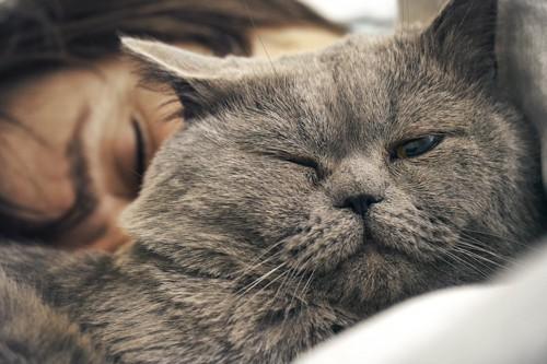 ベッドで眠る女性とウインクする猫