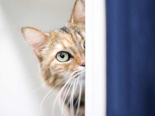 警戒する猫
