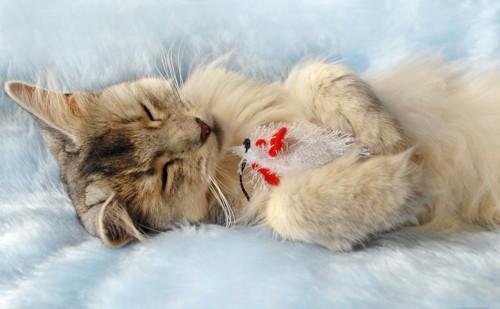 ねずみのおもちゃを抱えて眠るソマリの子猫