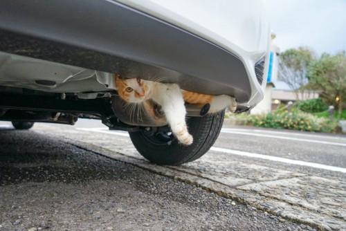 タイヤの上にいる猫