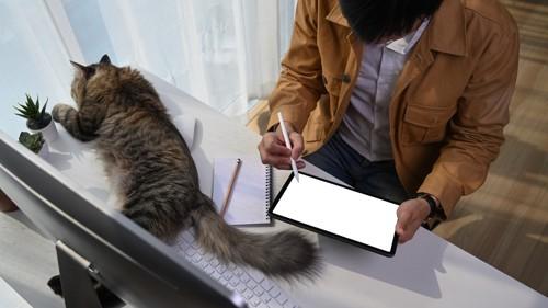 机の上で男性にお尻を向けて横座りする猫