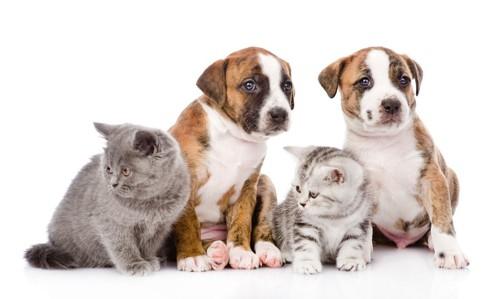 並んで座る犬と猫たち