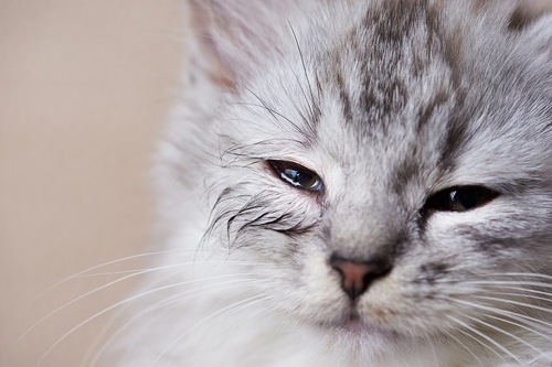 目を細めている猫