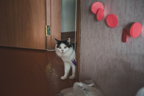 部屋の入り口から見つめる猫