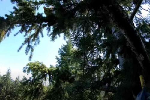 兄弟猫が立ち往生する木