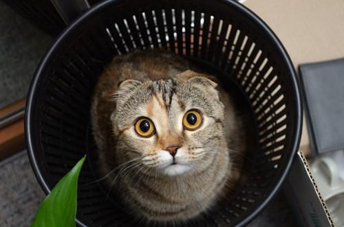 ゴミ箱から見上げる猫