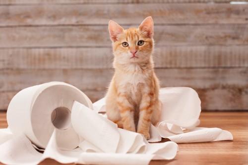 床に散らかったトイレットペーパーの上に座る子猫