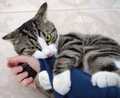 寝転んで飼い主の腕にじゃれつく猫