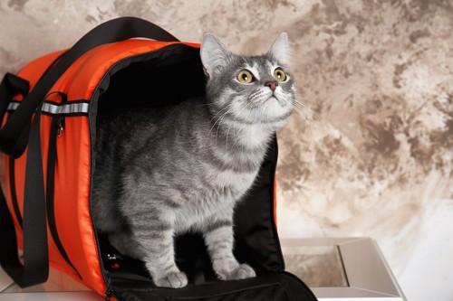 ケージから出てくる猫