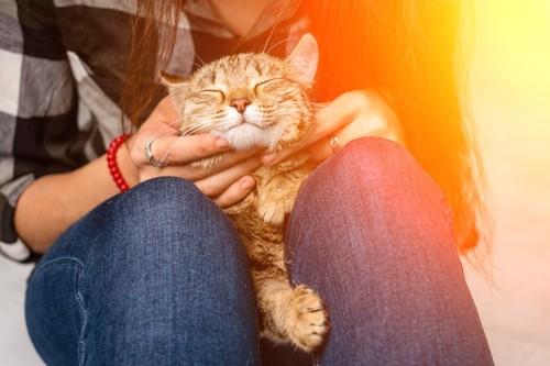 飼い主の膝の上で首周りをマッサージされている猫
