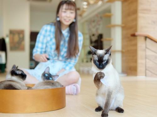 女性の前に座る猫