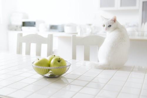 キッチンに座ってこちらを振り返る白猫
