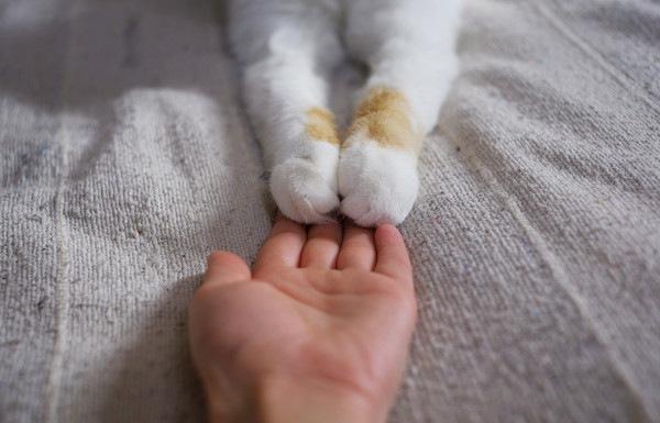 両手を人の手に乗せる猫