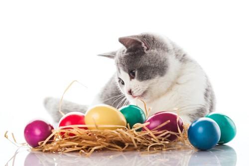 カラフルな卵を見つめる猫
