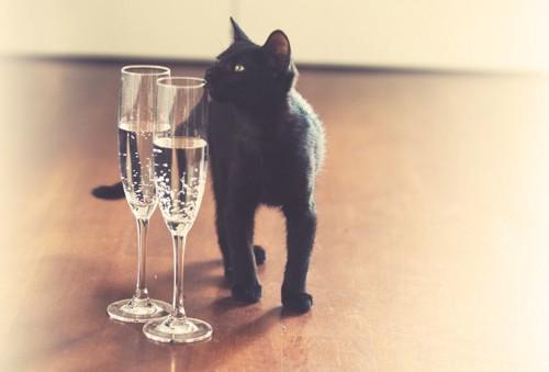 ワイングラスと猫