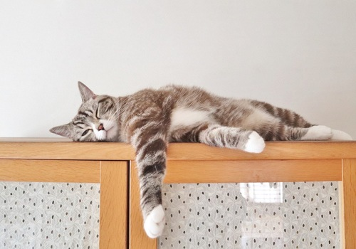 棚の上でくつろぐ猫