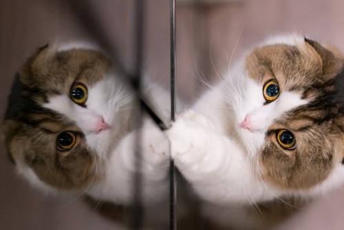 鏡に手をつく猫