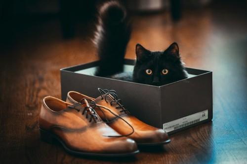 靴箱に入る黒い猫と靴
