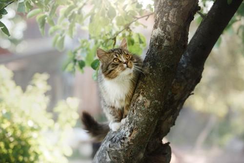 木の上に登る猫