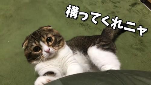 寝転んでソファーに前足をかける猫