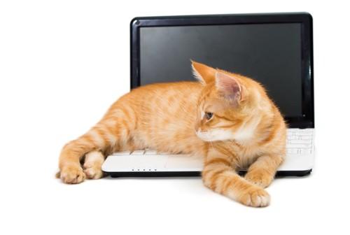 パソコン上でくつろぐ猫